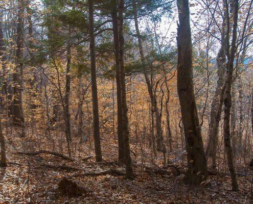 Beautiful colors in the woods around Saint John's Monastery